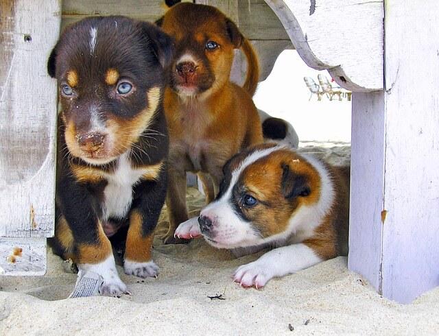3匹の子犬